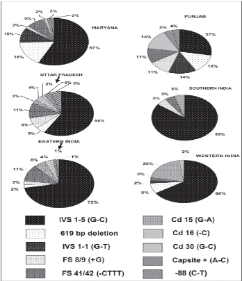 kyg-thalassemia-india